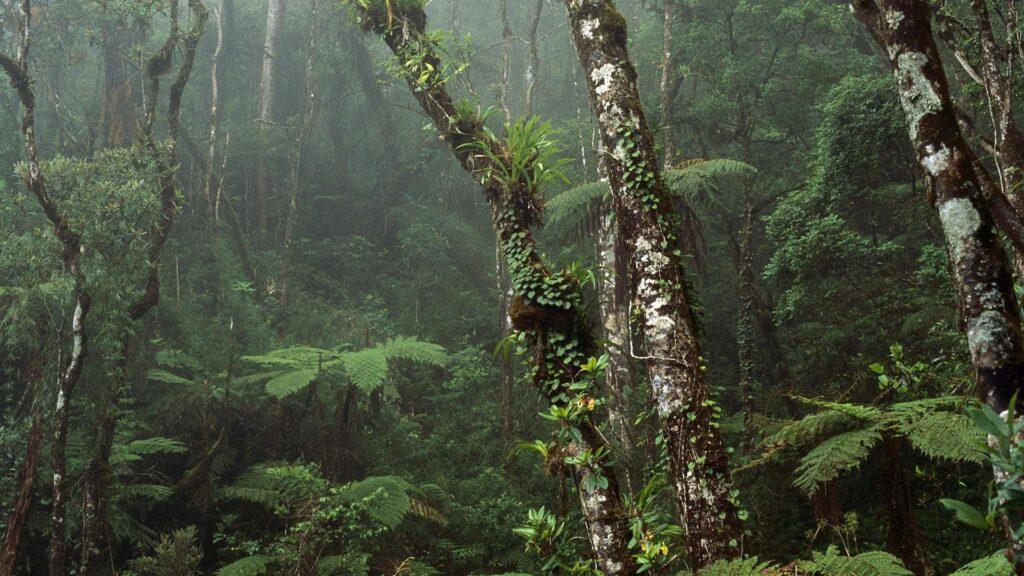 biodiversità-importanza-pillole-di-sostenibilità-ambientale-sustenia