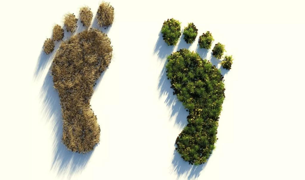 ecologia-ambiente-calcola-la-tua-impronta-ecologica-sustenia-pillole-di-sostenibilità