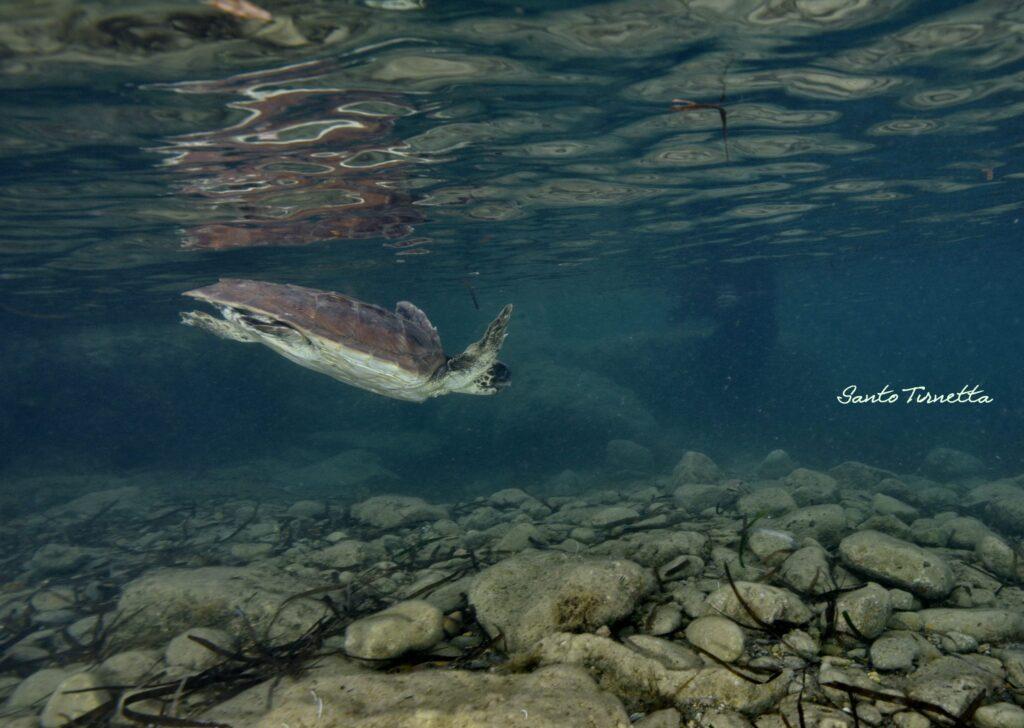 rio-mare-egadi-plastica-nei-mari-sostenibilità-ambientale-sustenia