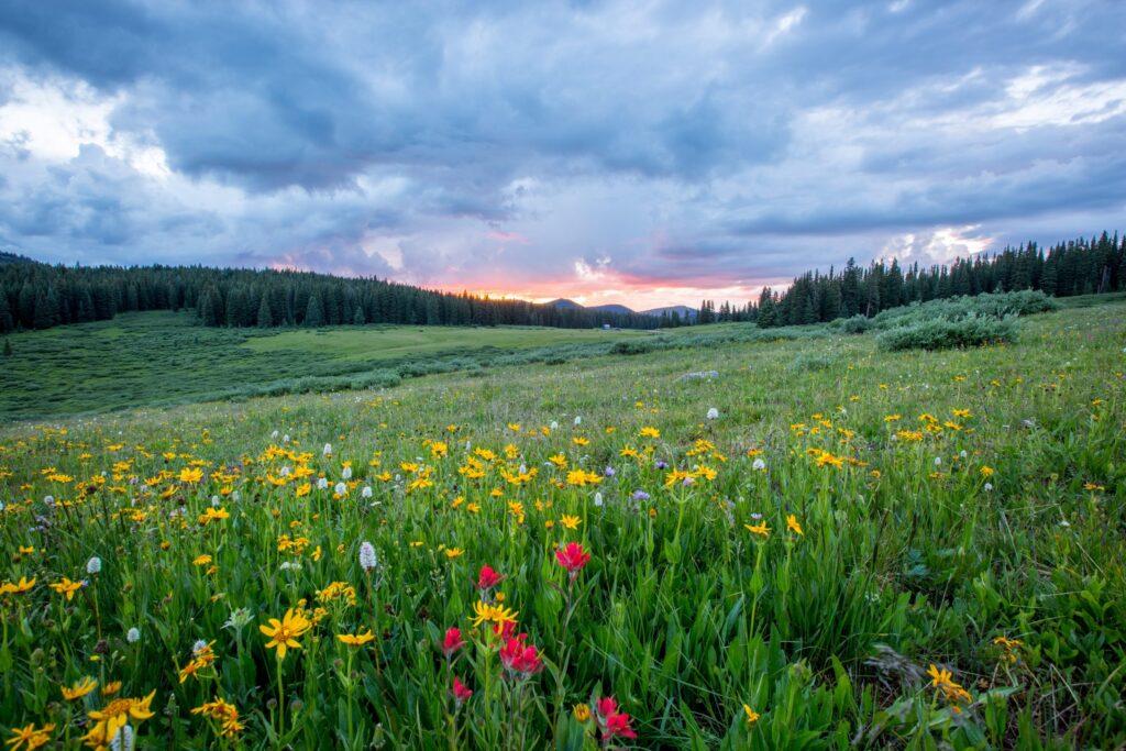 sostenibilità-ambientale-generare-impatti-positivi-sustenia